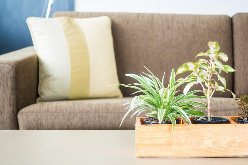 plant-air-quality-living-room