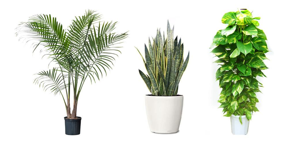 3 plants that imrpove home air quality