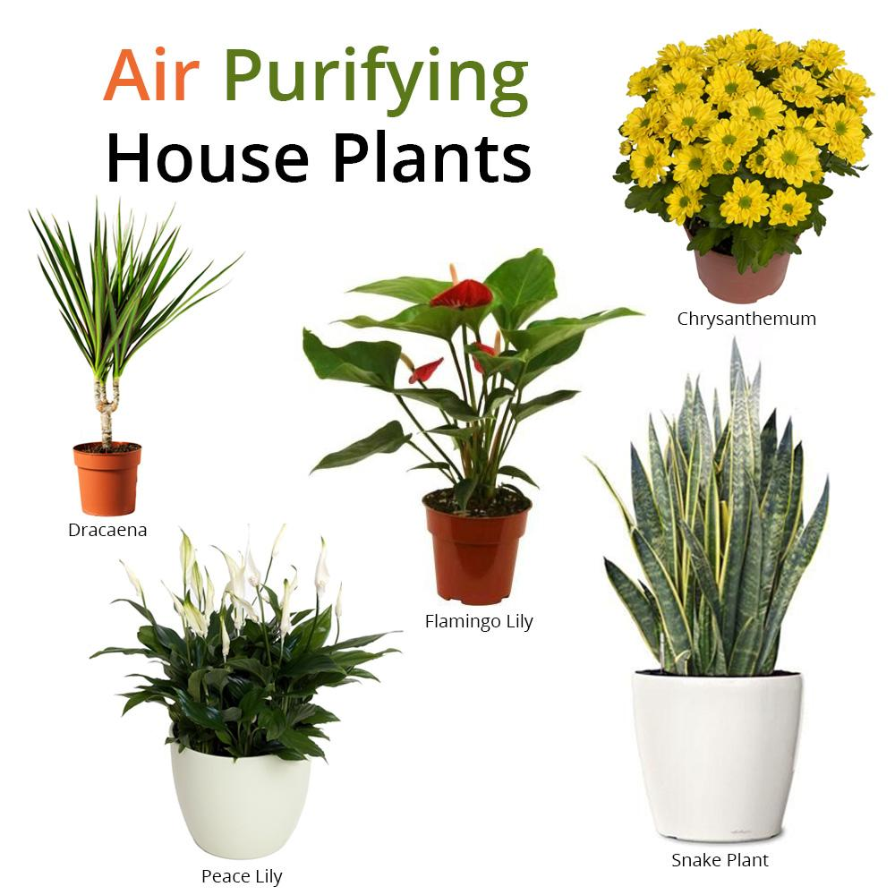 how to improve indoor air quality with these plants