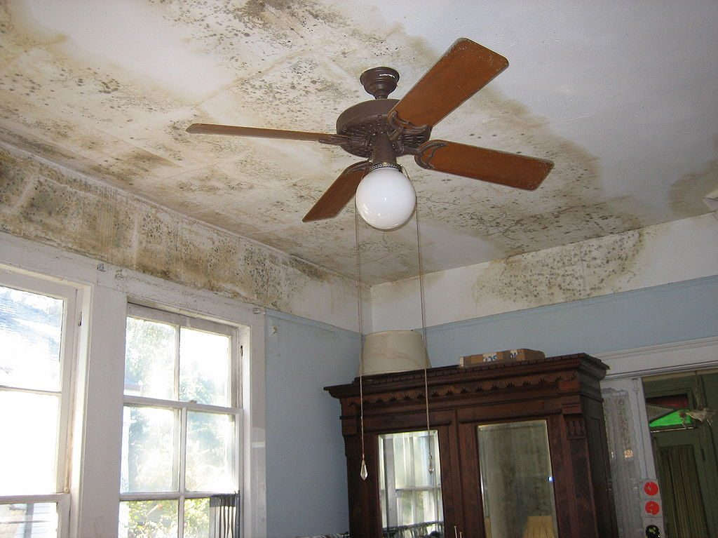 Example of a severe mold infestation.